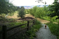 dog park in seattle